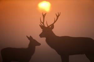 被誤認成一隻鹿   美國獵人遭射殺