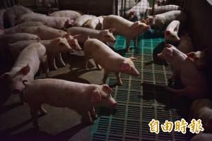 中國哈爾濱再傳非洲豬瘟疫情 19省市已淪陷