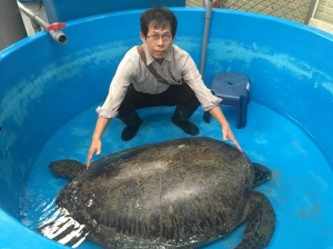 澎湖史上最大隻!海龜擱淺沙灘 7壯漢協助搬運送醫