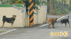 3狗圍攻拾荒老婦致重傷 飼主判刑3個月賠53萬