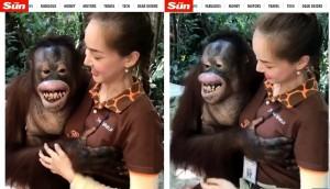 知道遊客喜歡?猩猩狂捏動物園正妹員工胸部