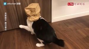 「本喵訓練第六感也要問你嗎?」 超愛戴紙袋冒險的貓笑翻網友