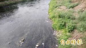 工廠又偷排廢水?烏日旱溪浮現大群魚屍 蔓延到上游大里