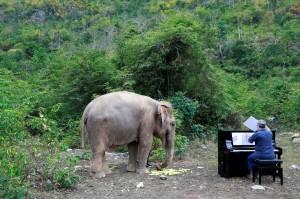 用琴聲撫慰受傷大象 這名男子7年不間斷「對象彈琴」