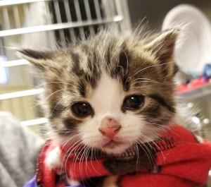 英國落實以領養替代購買!將禁止寵物店販售幼貓幼犬