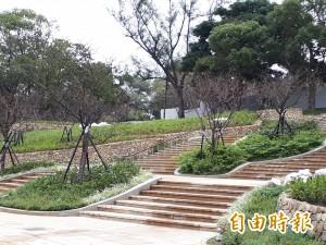 百棵櫻花移回 新竹公園櫻花季明年回歸重現!