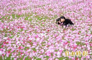 新年限定!埔鹽20公頃粉紅花海 讓遊子想回家了