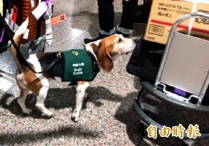 機場被爆檢疫犬漏洞 他返台驚:一隻都沒看到
