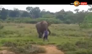 醉男找野生大象挑釁 下一秒悲劇發生...
