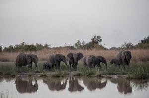 象牙合法貿易該放鬆還是嚴控? 非洲國家將在年度會議角力