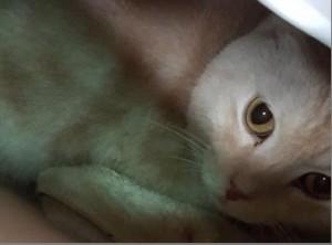 傻眼貓咪!誇張飼主將貓快遞到動物之家 遭罰3萬