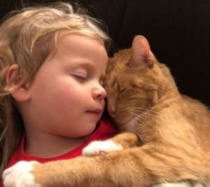 14歲老貓臨終 女童緊抱唱《你是我的陽光》暖哭網友