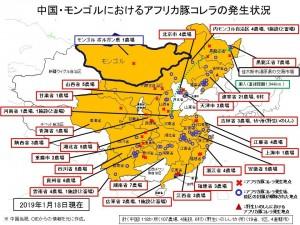 非洲豬瘟秋海棠正在成形!中國下令研發活毒疫苗