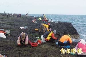 澎湖「黑金」紫菜開採 產量銳減2/3、約漲價2成