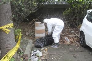 桃市蘆竹發現2頭死豬 動保處帶回採驗