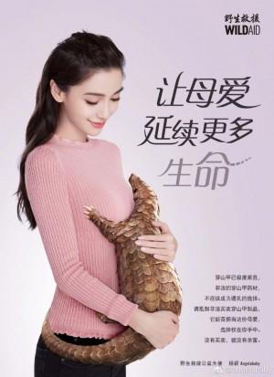 「不用穿山甲通乳」 女星拍保育廣告被批幫倒忙