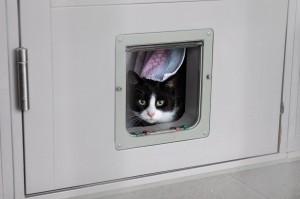 過年獨留貓在家、多放飼料就沒事?獸醫揭這樣超危險