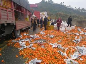 20噸橘子散落高速公路成「橘海」 清完要花5小時