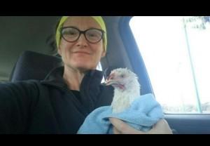 雞的報恩!母雞路邊落難被救 固定下蛋答謝恩人