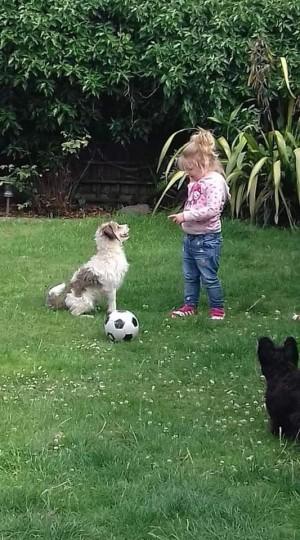 自閉症女孩的狗狗走丟了 她反覆問這句話家人心碎