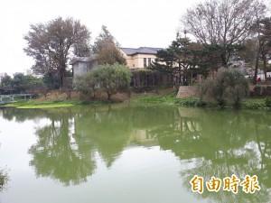 大年初一來走春  新竹公園櫻花悄悄綻放了!