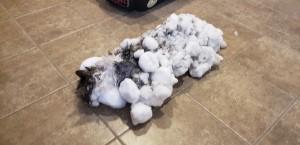 極端低溫貓咪結凍!「退冰」後變回美貓