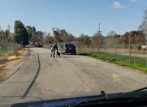 不知遭拋棄 狗狗奔跑緊跟主人車後讓網友超不忍