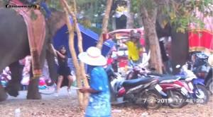 泰國大象發狂!捲人狂甩撞樹 15歲女學生命大受輕傷