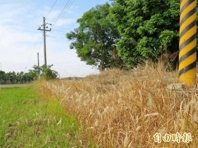 肥料也能除草!新款有機肥料問世助功有機農業