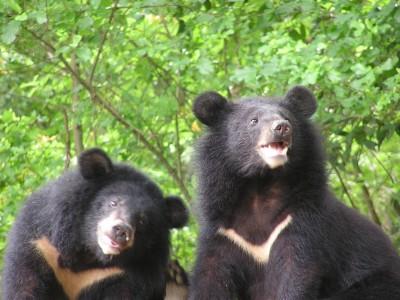 首例!玉山塔塔加垃圾桶被翻倒 竟是台灣黑熊幹的