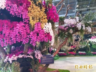 台灣國際蘭展下月2日登場 主題展區搶先看