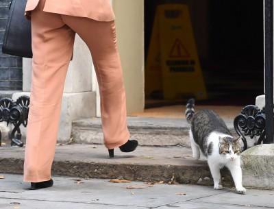 家中貓咪脾氣差都是學你的!研究:貓咪會有樣學樣