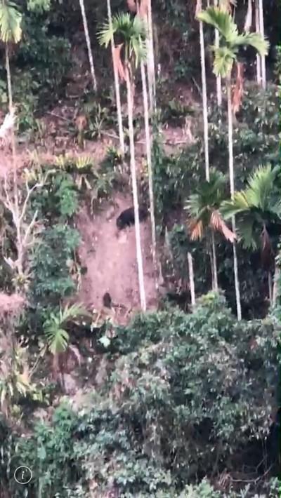 熊出沒!台灣黑熊傳現蹤阿里山森林鐵路(影音)
