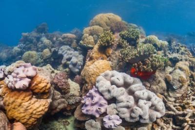 如野火般摧毀生態 研究:全球「海洋熱浪」日益嚴重