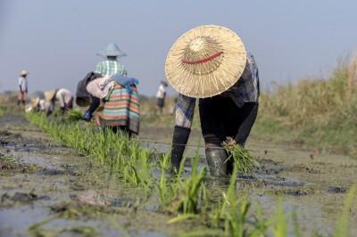 雪上加霜! 北韓糧食不足創十多年最低 人道援助又被砍