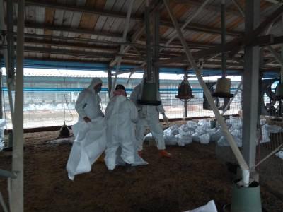 不是暖冬嗎?彰化再傳禽流感 今年2起只相距600公尺