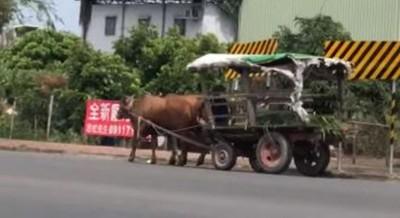 原廠選配水牛黃!台南正港「小牛超跑」現身街頭