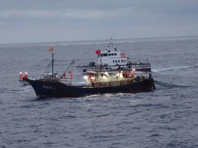 可惡!中國漁船入侵東沙海域 濫捕禁捕物種押回法辦