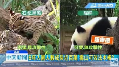 貓熊比石虎、黑熊可愛又溫和?荒謬對比專家打臉