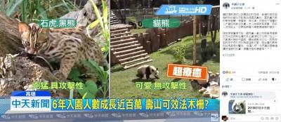 媒體稱比起石虎「貓熊可愛程度超出一大截」 網友氣炸
