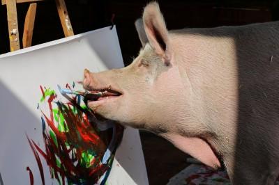 「豬加索」長大了!牠一張畫賣到12萬多