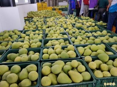 謝龍介公布簽約收購價 麻豆柚農轟破壞行情