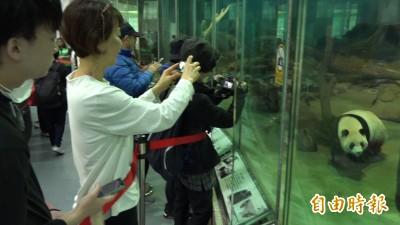 大貓熊真的這麼難養?飼養員心內話告訴你