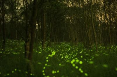 螢火蟲世紀婚禮夯 蕭美琴譽最美花蓮之「光」