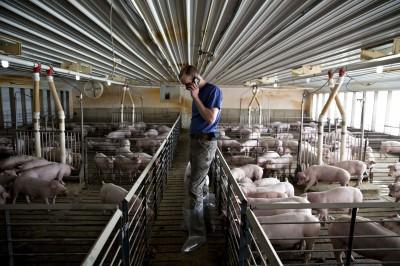 關稅62%仍狂買美國豬!中國打貿易戰 非洲豬瘟扯後腿