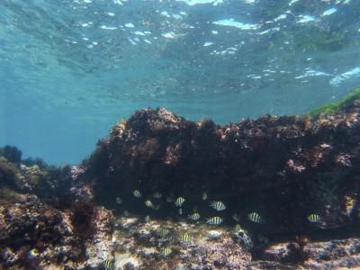 上路3年…新北海洋保育區檢舉獎金沒人領過