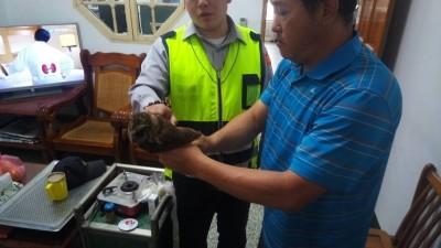 擦撞車輛遭擊墜 保育類「領角鴞」路倒獲救