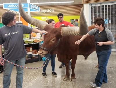 牛仔牽「巨獸」逛寵物店!店員樂瘋狂拍「史上最大顧客」