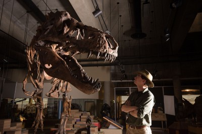最大暴龍現身! 生物學家花數十年重建骨骼