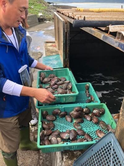 中國鮑魚6.8倍傾銷 貢寮九孔養殖業者哀鴻遍野